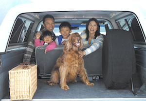 Animal Family in car with dog