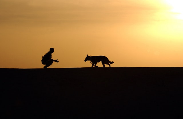 dog trainer silhouettes sunset 38284